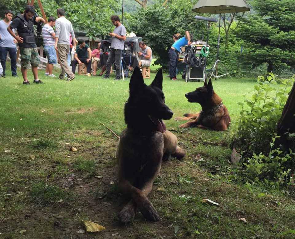 Aktör Köpekler